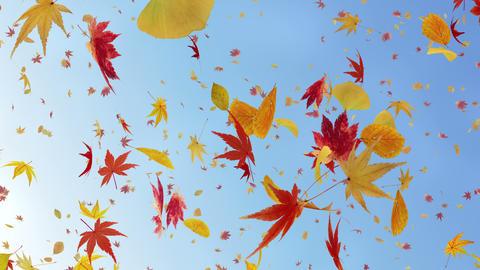 Autumn Leaf tornado Cr 2 4 K Animation