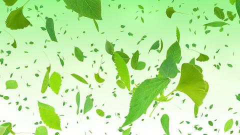 Green Leaf tornado Ag 4 K Animation