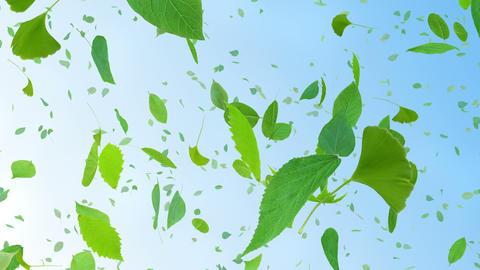 Green Leaf tornado Cb 4 K Animation