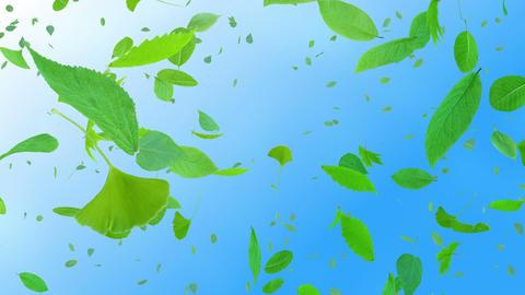 Green Leaf tornado Db 4 K Animation