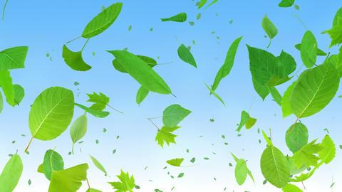Green Leaf tornado G 2bb 4 K Animation