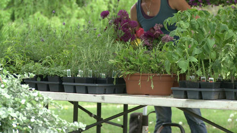 Plants being displayed at a plant fair Footage