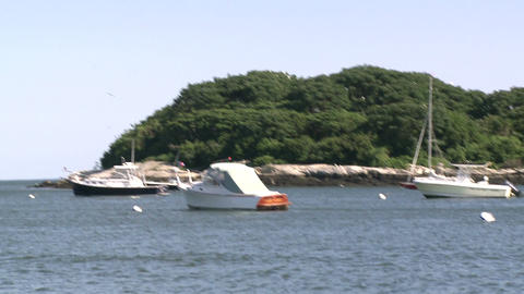 A small tree lined island with boats moored in front (3 of 3) Footage