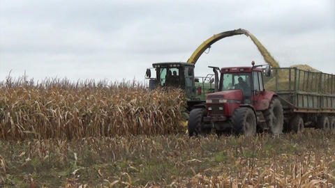 field heavy machinery gather autumn maize corn harvest Footage