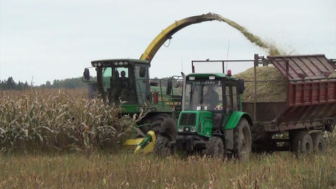 work maize field harvester cut pour grain into tractor trailer Footage