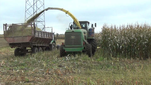 maize field work harvester cut pour grain into tractor trailer Footage