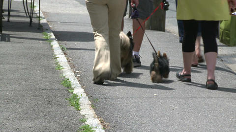 Two people walking their dogs down the sidewalk Live Action