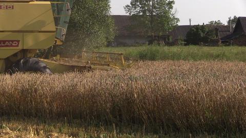 Yellow modern combine harvest wheat grain field in summer Footage