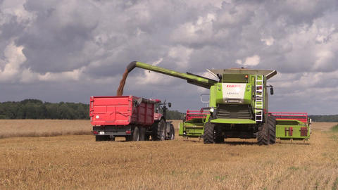 Agricultural machine load harvested grain into truck trailer Footage
