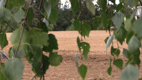 Tree leaves move and tractor fertilize sow field in summer Footage
