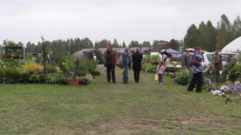 People Walk Between Plants In Botanical Garden Marketplace stock footage