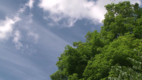 Looking above the trees to blue skies and white fluffy clouds (2 of 2) Footage