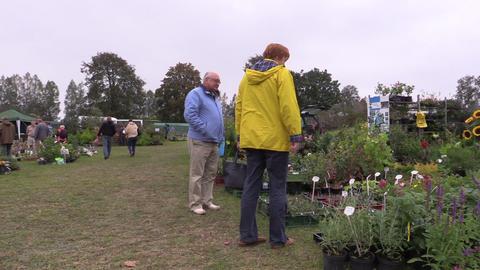 Customers look at plants seedlings sold in botanical market fair Footage