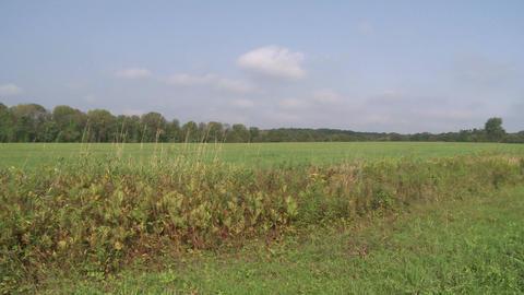 Looking across a grassy field (1 of 2) Footage