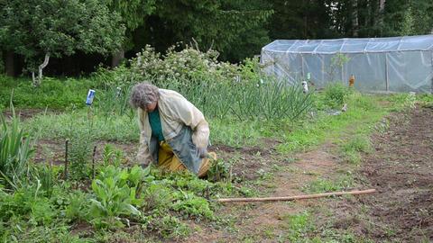 grandmother grub weeds by hand kneeling between beds Live Action