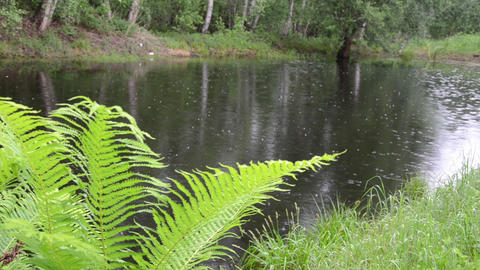 nice fern leaves in background of the pond glittering raindrops Footage