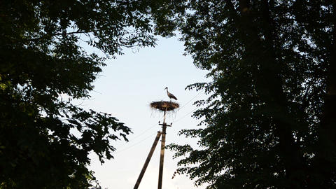 lonely stork nest on a power pole between the large branches Footage
