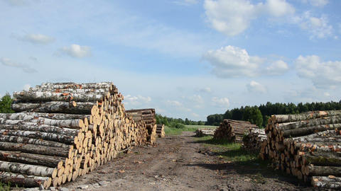 Panorama of wood fuel stacks and birch logs near forest Footage