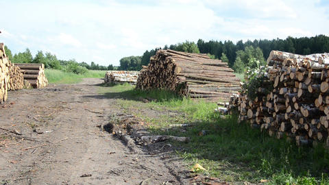 Panorama of wood fuel birch and pine logs stacks near forest Footage