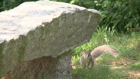 Squirrel rummaging through the forest (3 of 4) Footage