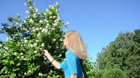 girl in blue sweater pick jasmine bush white blooms in summer Footage