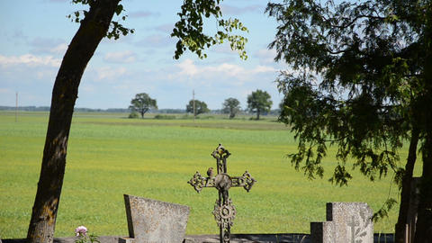 Sparrow bird sit and fly from retro cross in rural cemetery Footage