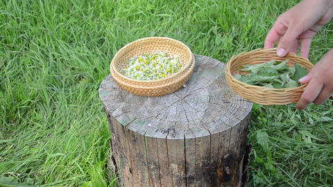 Herbalist hand put dish with mint balm plant and camomile flower Footage