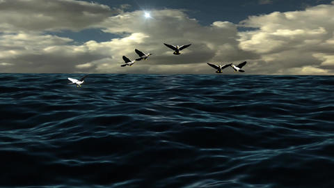 Natural Ocean Wave With Flying Flock Bird Light Sunset Stock Video Footage