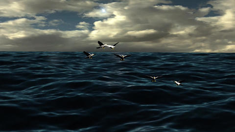 Natural Ocean Wave With Flying Flock Bird Light Sunset Footage