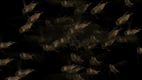 4k Locusts pests background,worms insects flies breeding disasters backdrop Footage