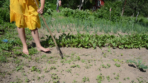 Barefoot woman in yellow dress grub weeds with hoe in garden Footage
