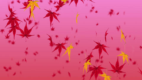 Falling Japanese Maple Leaf 2 stock footage