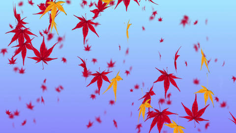 Falling Japanese Maple Leaf 3 stock footage