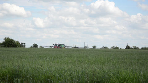 Tractor with special equipment fertilize wheat field in summer Live Action