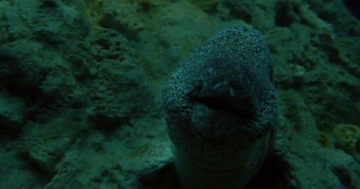 mediterranean moray 02 Footage