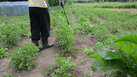 Gardener farmer protecting plant from vermin using sprayer Live Action