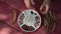 closeup gardener hands shell husk decorative colorful beans pods Footage