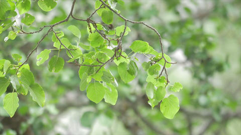 Tree Leafes In The Wind And Sun stock footage