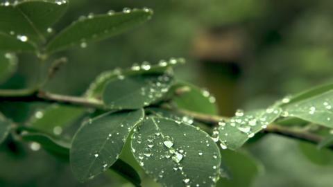 Rain drops leaves Live Action
