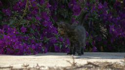 Beautiful And Sweet Kittens, Playing Together stock footage