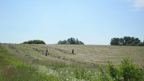 men half undressed manual rake hay in rural agriculture field Footage