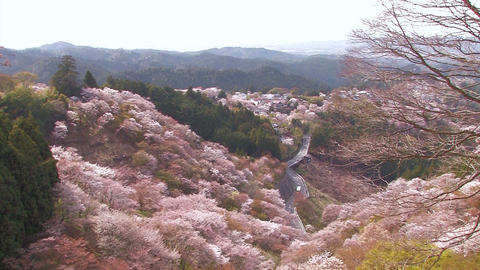 Spring landscape in Mt.Yoshino,Nara Japan_3 Stock Video Footage