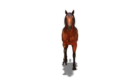 馬 6種類 Stock Video Footage
