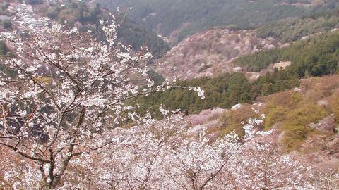 Spring landscape in Mt.Yoshino,Nara Japan_5 Stock Video Footage