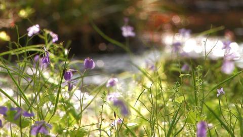 Spring little flower in Showa Kinen Park,Tokyo,Japan Stock Video Footage