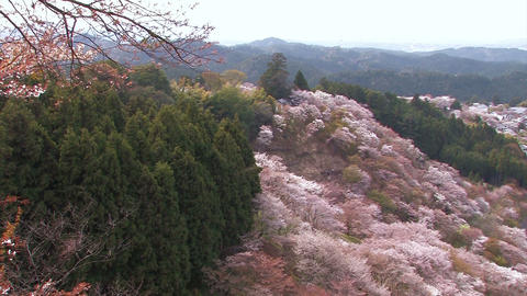 Spring landscape in Mt.Yoshino,Nara Japan_5 Stock Video Footage