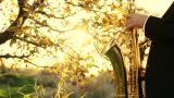 man play on golden saxophone in nature instrumental blow jazz instrument Footage