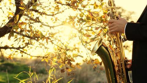 man play on golden saxophone in nature instrumental blow jazz instrument Live Action
