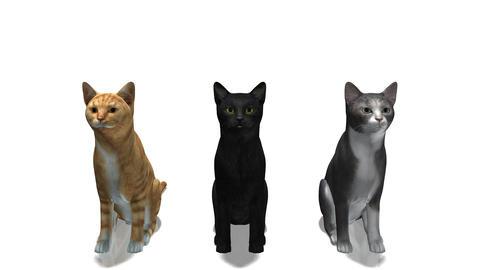 立つ猫 Stock Video Footage