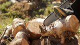 cutting Wood electric saw firewood forest ecology chop timber lumber pine Footage
